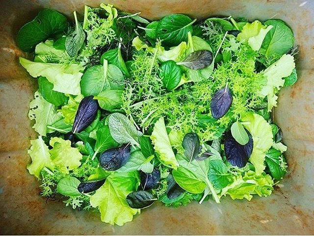 Every week we get a delivery from our sweet friends at Kolea Farms and your lucky littles bodies get to consume it. Here's a photo of their spring mix. Best in the land! @kolea_farm