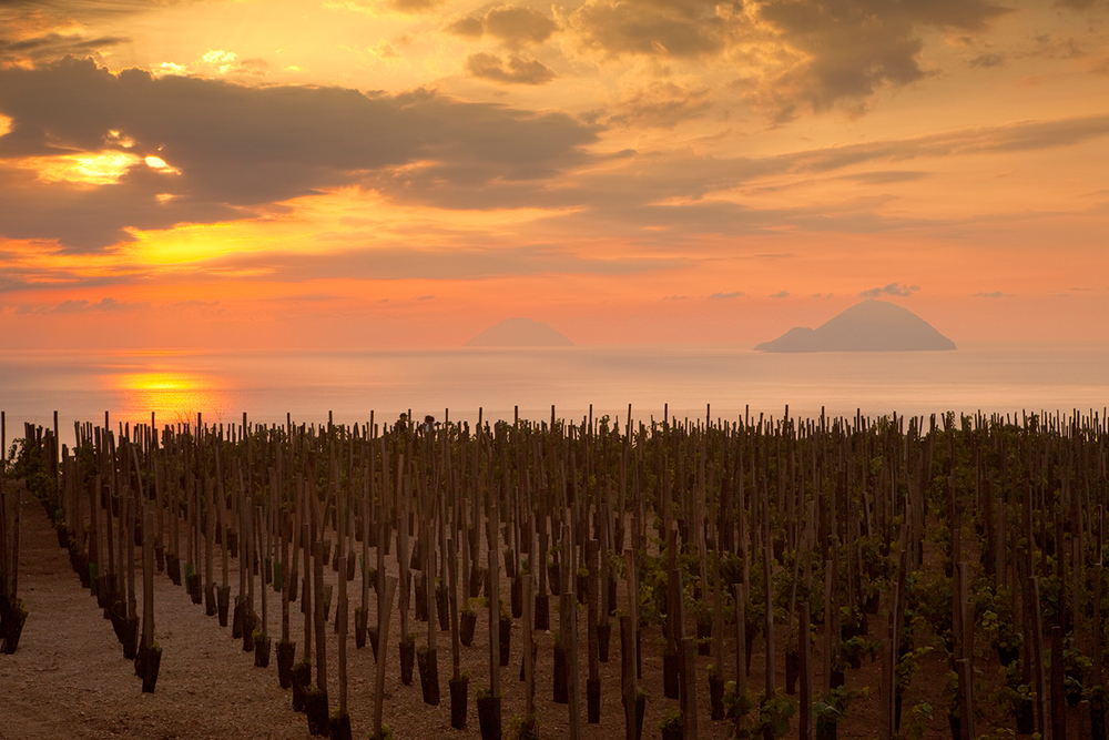 Tenuta di Castellaro vineyard