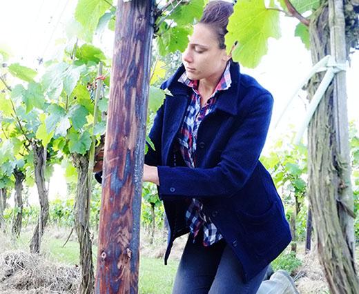 Vineyard2herbert.jpg