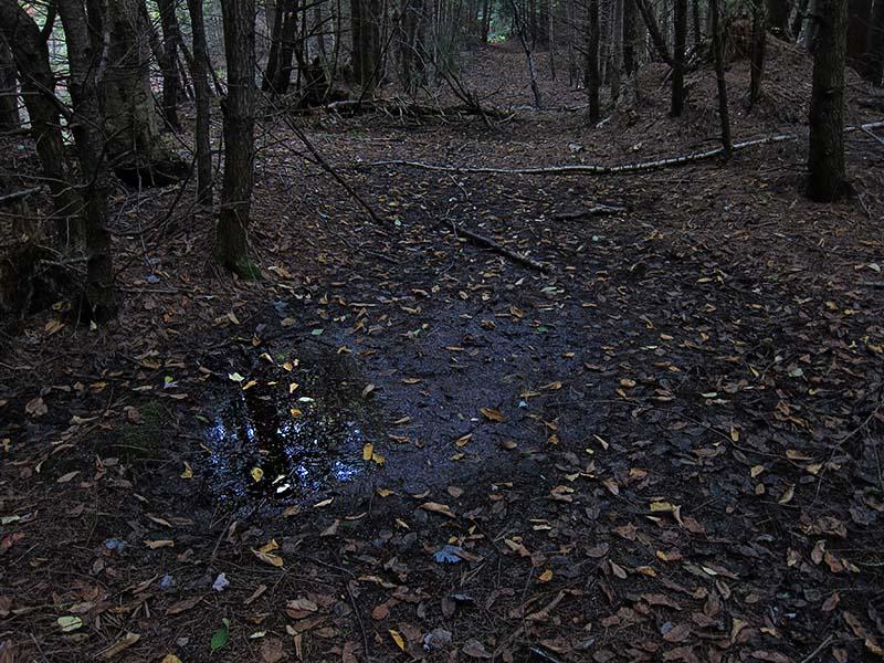 Trail at Daylight