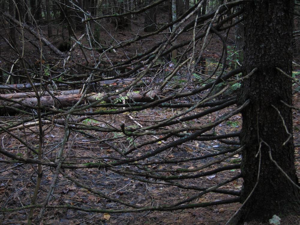 Fun stuff to cut a trail through