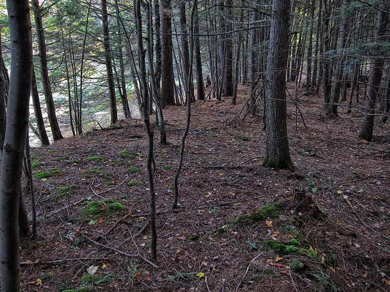 Ridge between swamps