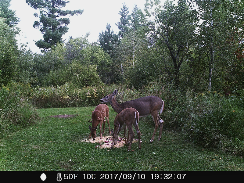 From the game camera at Rauhallinen Farm