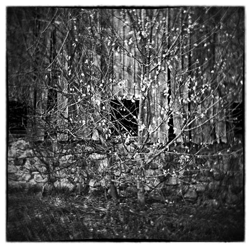 Holga 120N with Ilford HP5+ developed in PMK Pyro