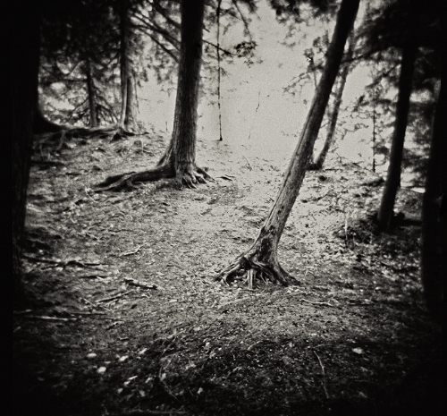 Holga 120N with Ilford Pan F developed in Rodinal 1:25 for 12 Minutes