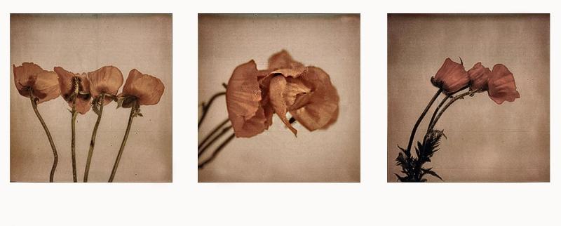 Polaroid SX-70 Triptych