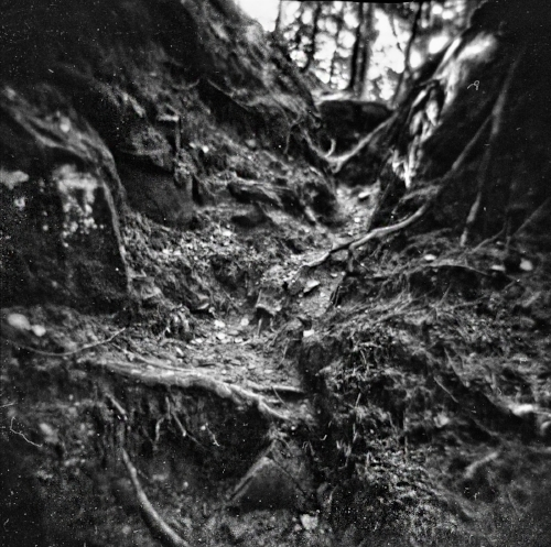 Holga 120N with Ilford Pan F developed in Rodinal 1:50