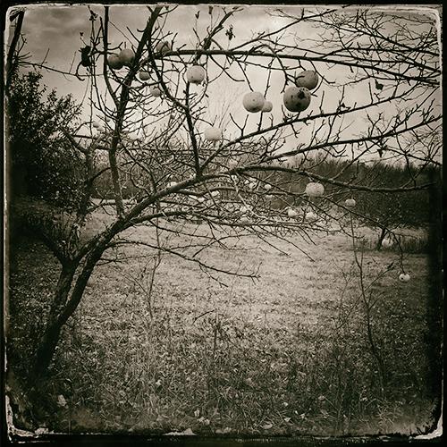 apples 2.jpg