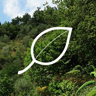 Il nostro impegno organico al 100% - Solo prodotti biologici certificati al 100% e ingredienti biologici certificati al 100%