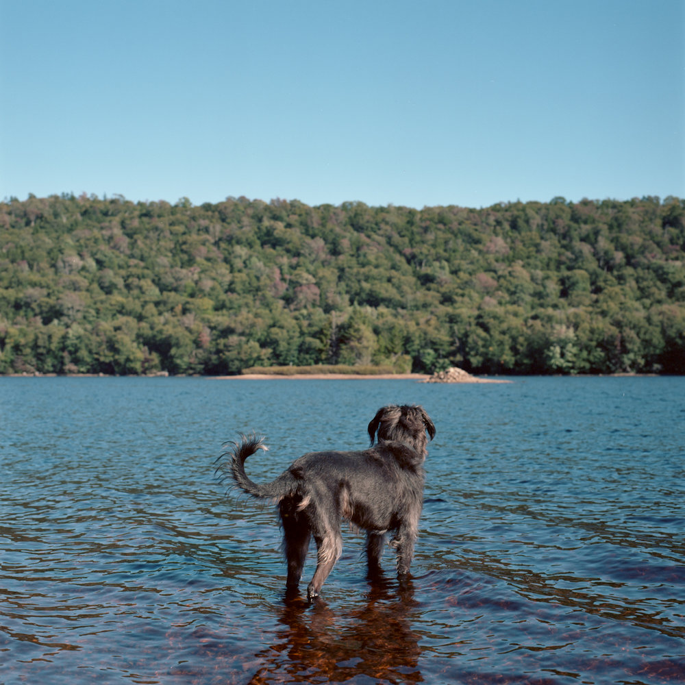 Oskar The Dog on North Lake