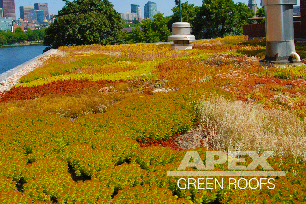 Harvard_Business_School_ShadHall_2_greenroof.png