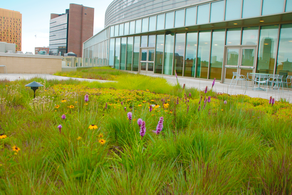 Simmons_College_greenroof_HP.png