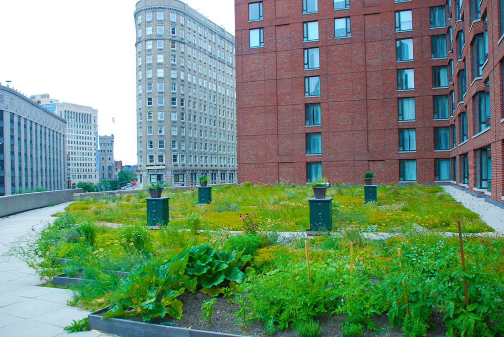Four_Seasons_Boston_greenroof_HP.png