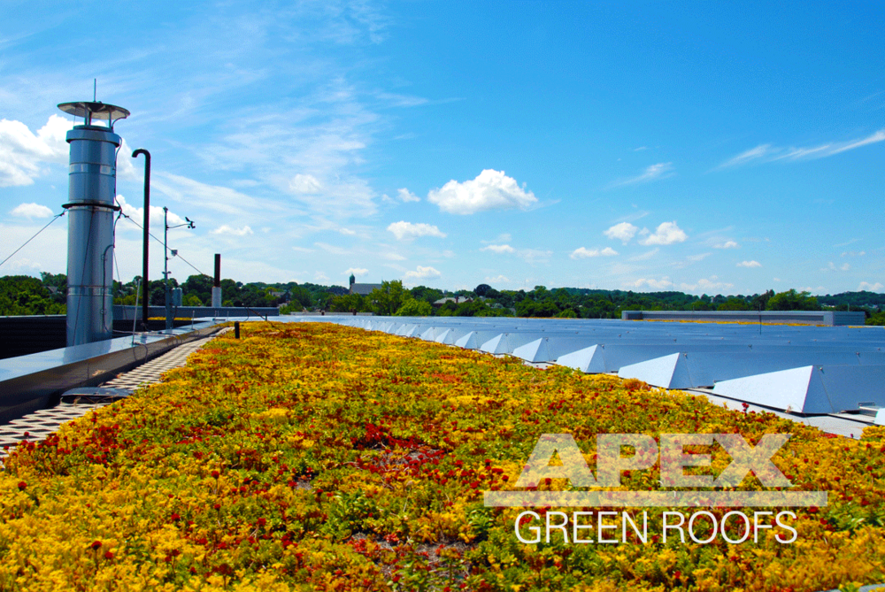 Vegetated roof at WGBH Allston MA