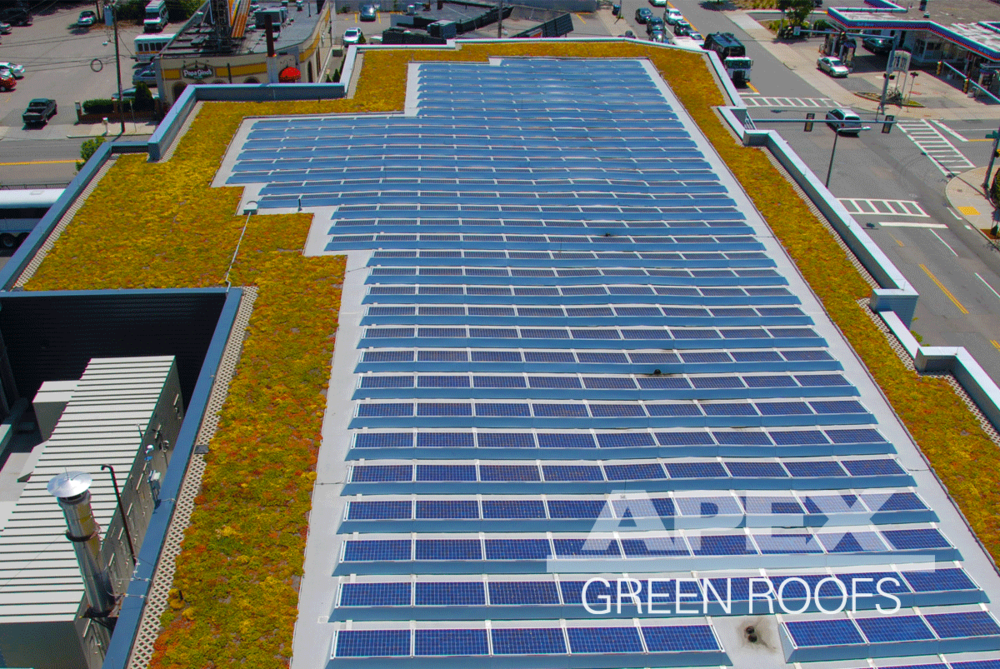 WGBH Green Roof in Allston MA