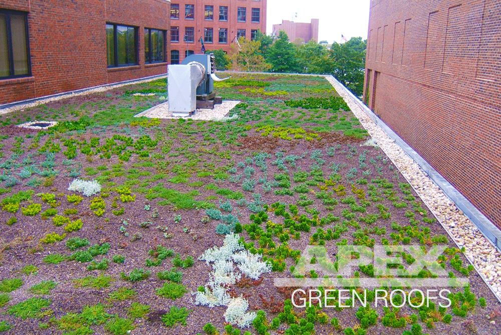 Rowland_Institute_at_Harvard_3_greenroof.png