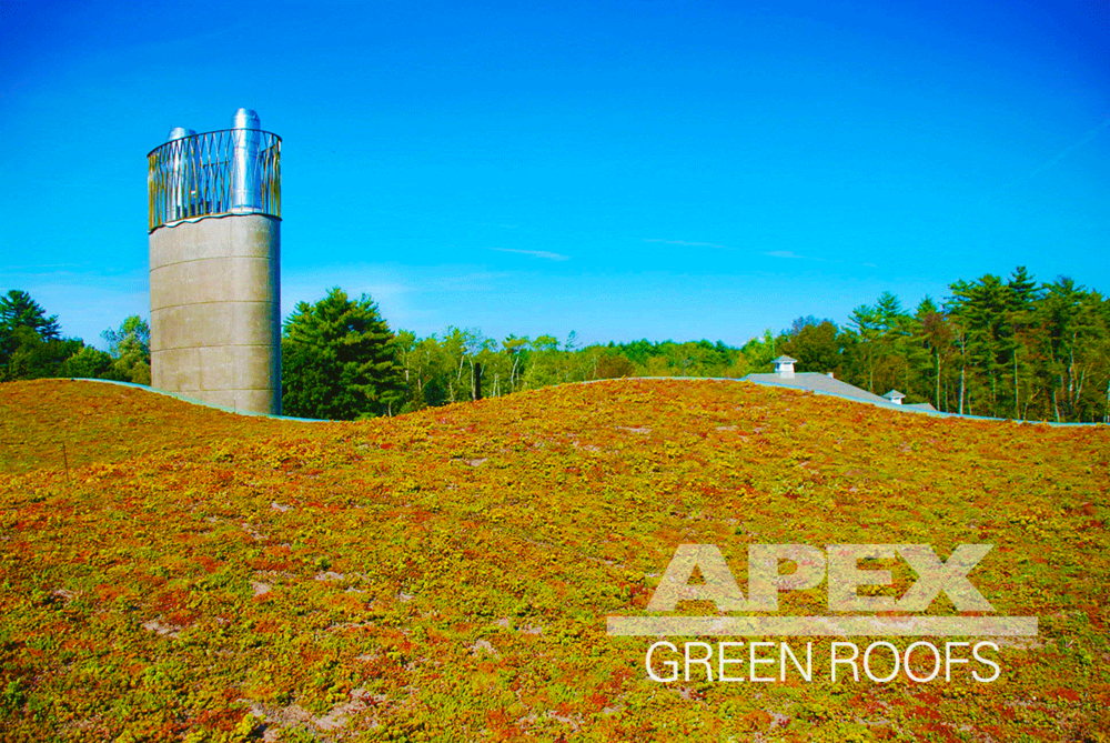 Hotchkiss_School_Biomass_Facility_greenroof.png