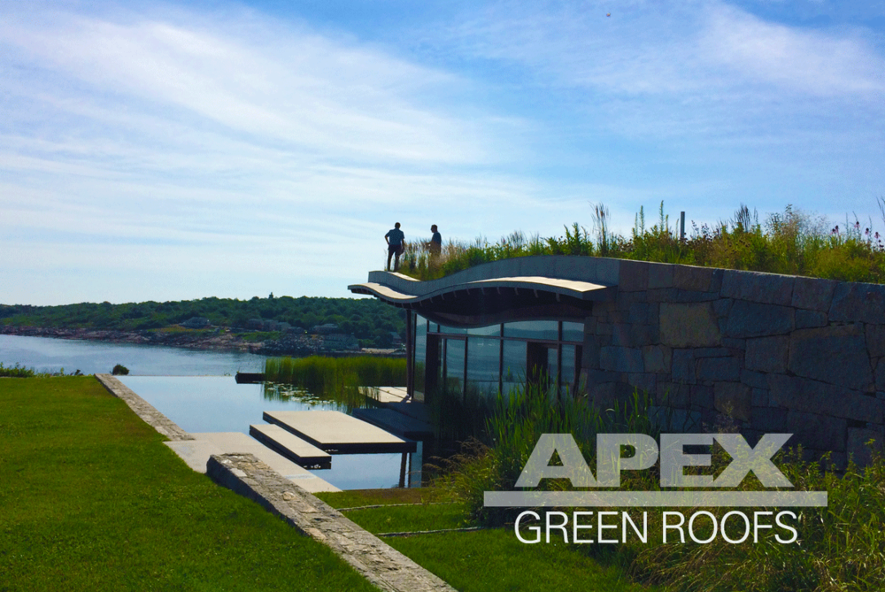 Residential_GreenRoof_Gloucester_Massachusetts