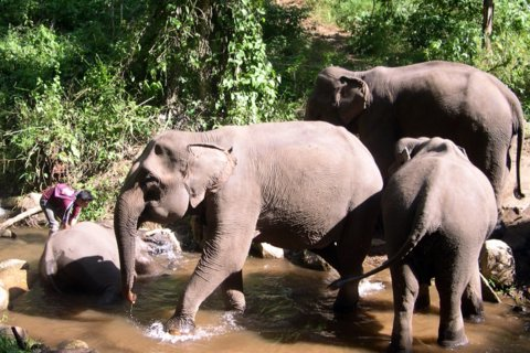 Elephants bathing in the jungle in Northern Thailand, just before I got a head-to-toe shower of my own