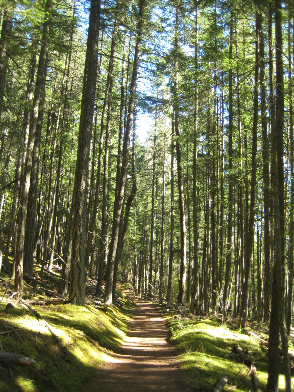 Hiking through the trees on Orcas Island