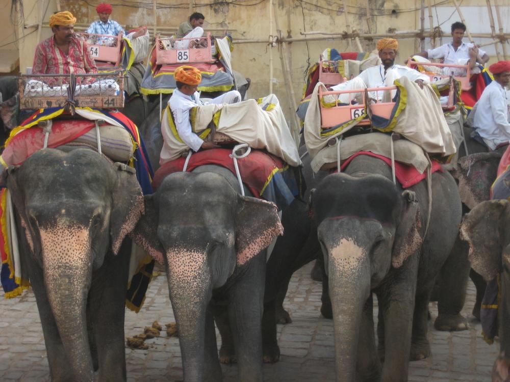 India 2011_5229