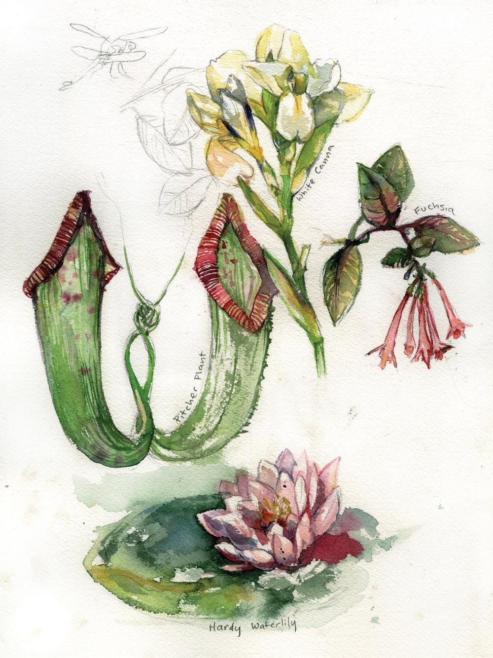 botanyprint16.jpg