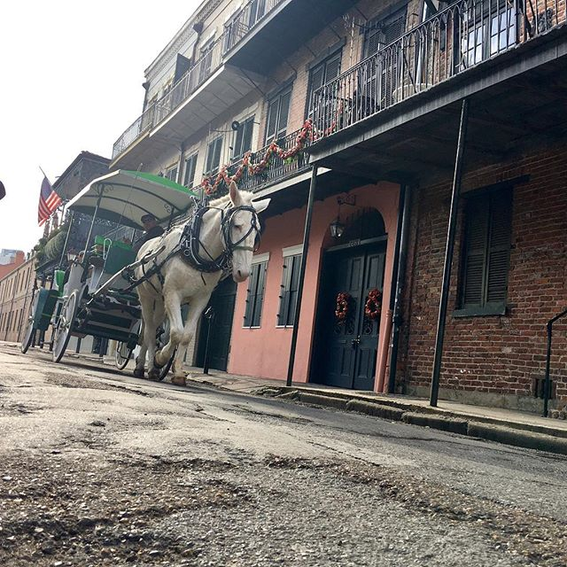 Christmas in the French Quarter #christmas #neworleans #frenchquarter #louisiana #christmasvaction #christmasday #babyjesus #drinking #mule