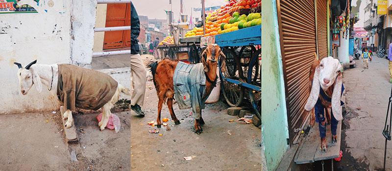 GRUNGE PUNK RAP I INDIA I 2015