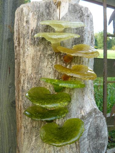 Glass-Fungi.jpg