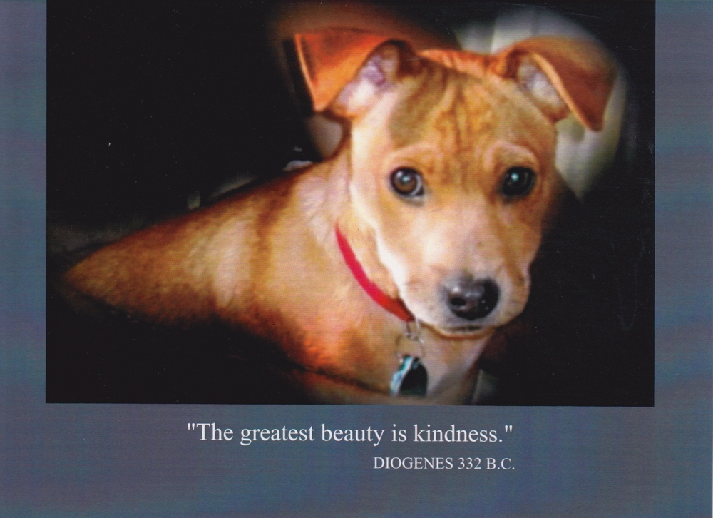 "3    ""The greatest beauty is kindness.""    (Inside) Blank card"
