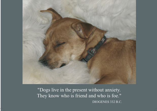 "4   ""Dogs live in the present without anxiety. They know who is friend and who is foe.""  (Inside) Blank card"