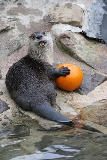 Photo credit Zoo New England