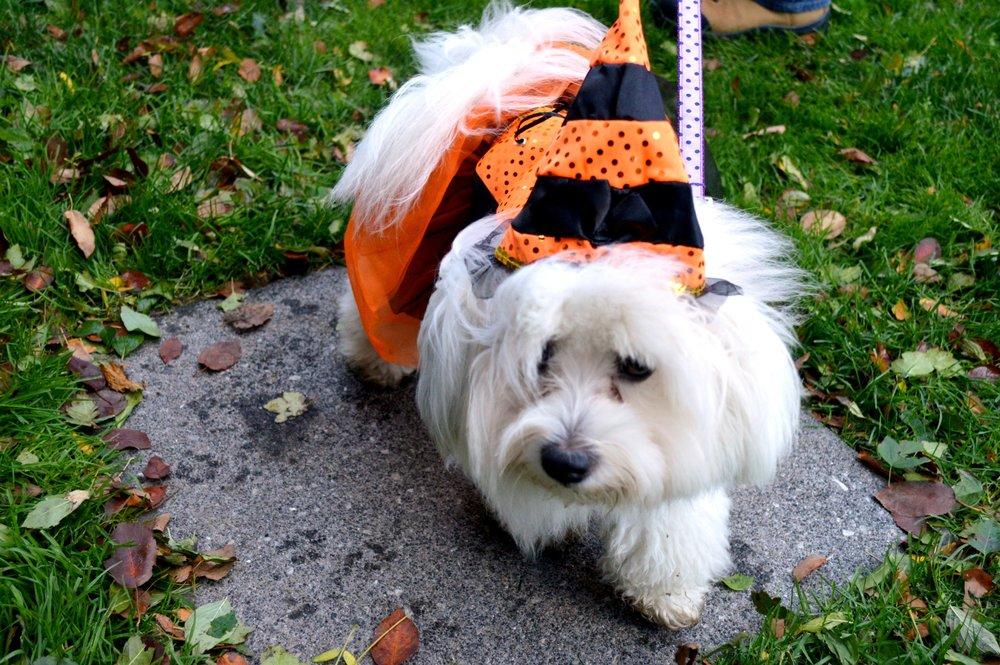 Puppy Witch.jpg