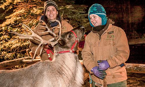 zoolights_reindeer.jpg