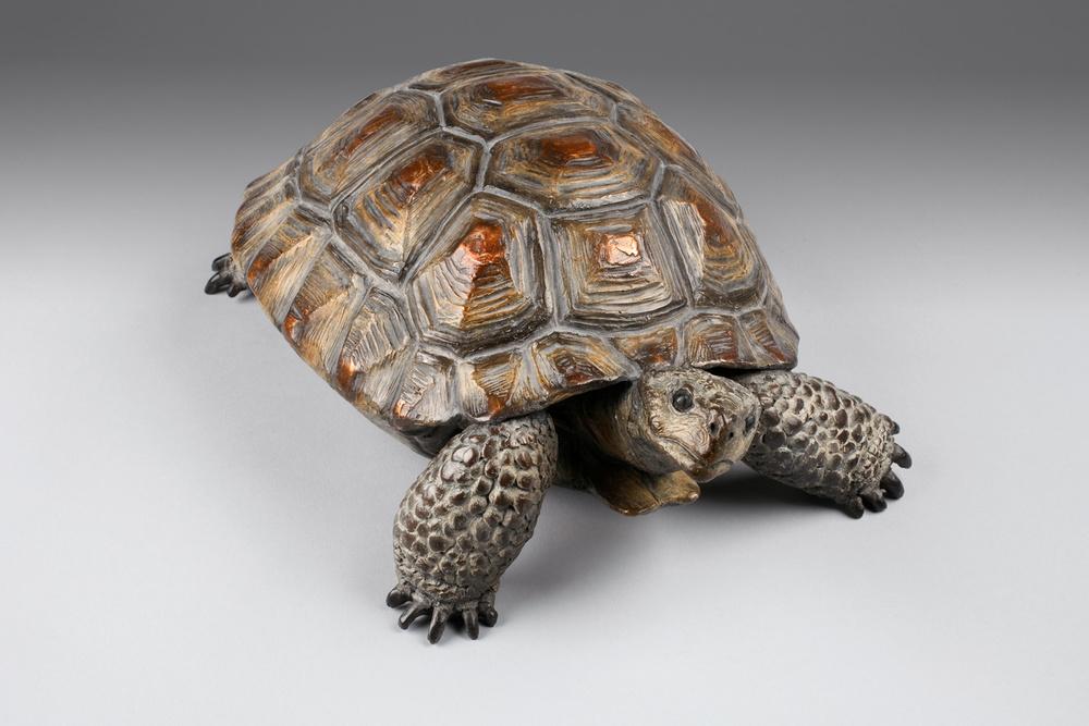 Desert Tortoise |
