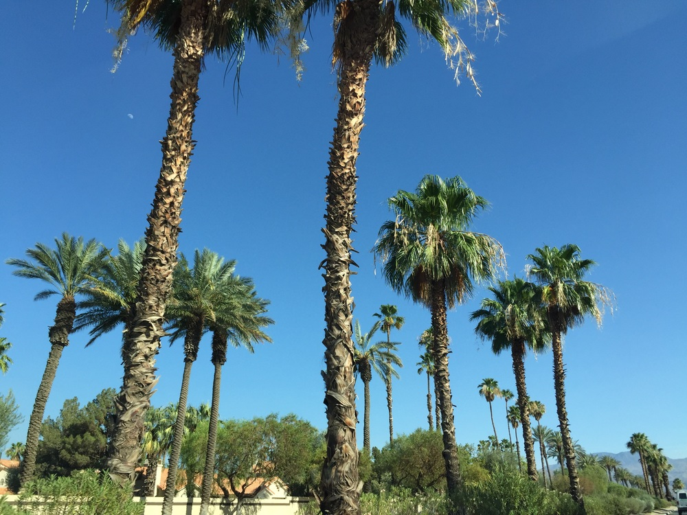 I absolutely adore Palm trees! Here are some more rad pics of the trees :-)