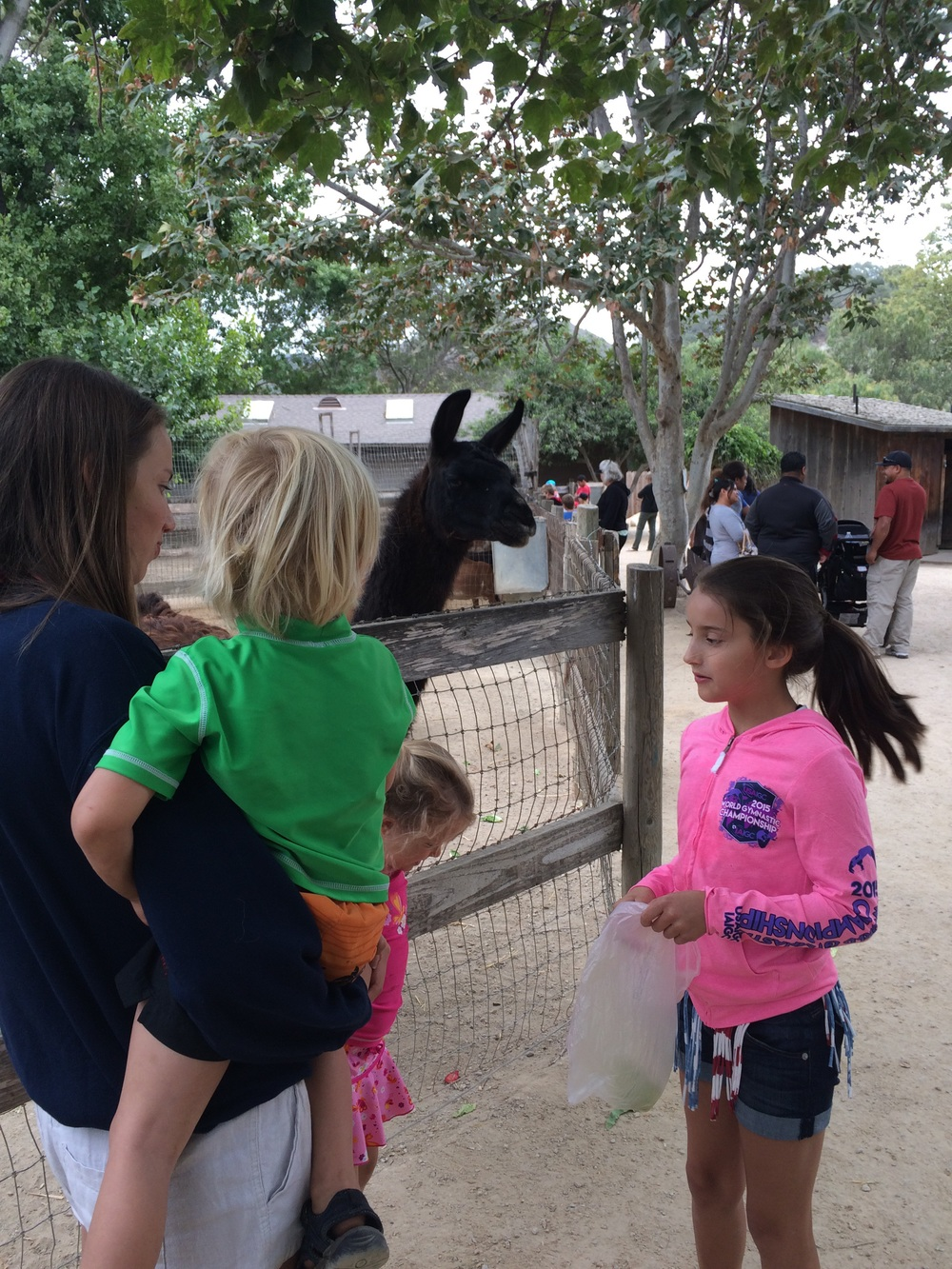Here we are at the animal farm feeding the llama!