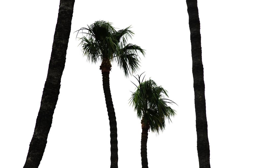 Jason Ogulnik_San Diego