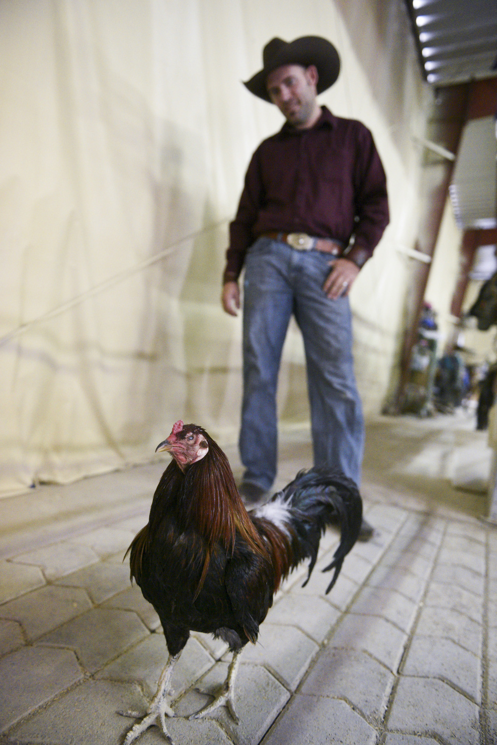 Paul Rogers, owner of Las Vegas' Paradise Ranch, poses with rescue rooster, Captain Hook, who lost his left eye as the result of being exploited as a fighting cock. Monday, June 1, 2015. (Jason Ogulnik/Las Vegas Review-Journal)