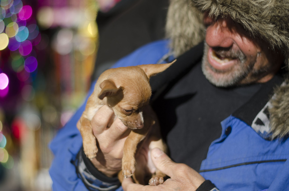 A man interacts with his puppy between posed portraits at Fremont Street Experience in Las Vegas Sunday, Nov. 29, 2015.