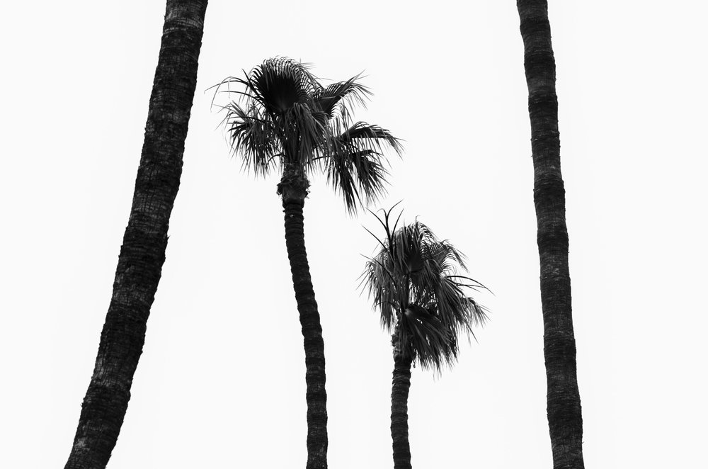 Palm trees in San Diego, Calif., June 2015.