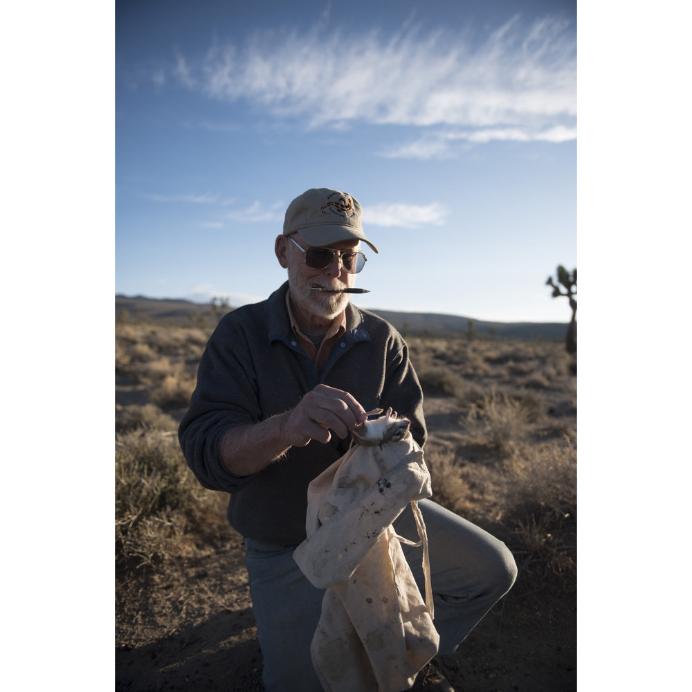 Jim Patton, emeritus professor and curator of mammalogy with The Museum of Vertebrate Zoology at UC Berkeley, prepares to tag a rodent found in a trap left overnight as part of The Grinnell Resurvey Project in Death Valley National Park, Calif., Sept. 26, 2017. The Grinnell Resurvey Project revisits the sites originally surveyed by Joseph Grinnell more than a century ago to inventory terrestrial vertebrates.