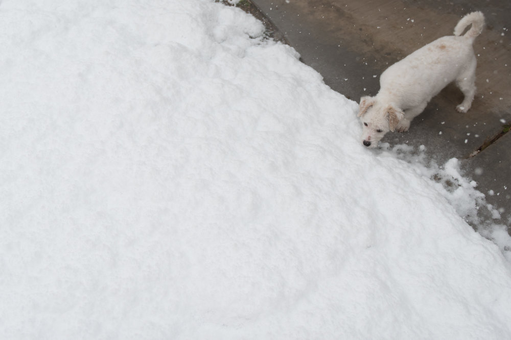 Moxie snow_2_21_19_001.jpg