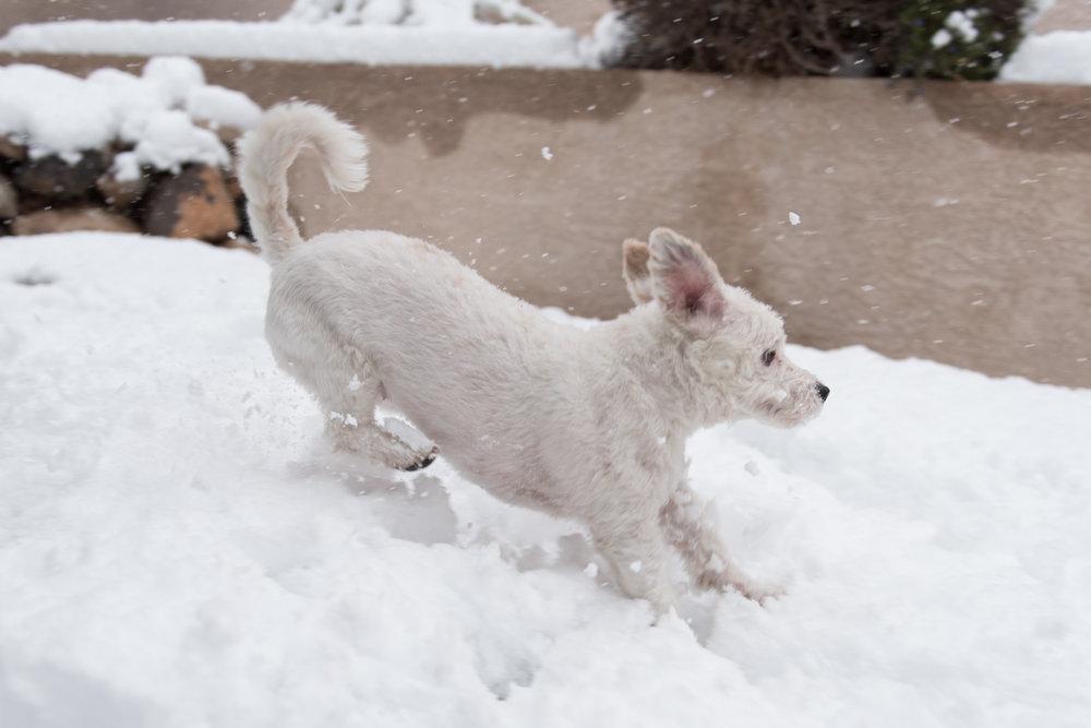 Moxie snow_2_21_19_002.jpg