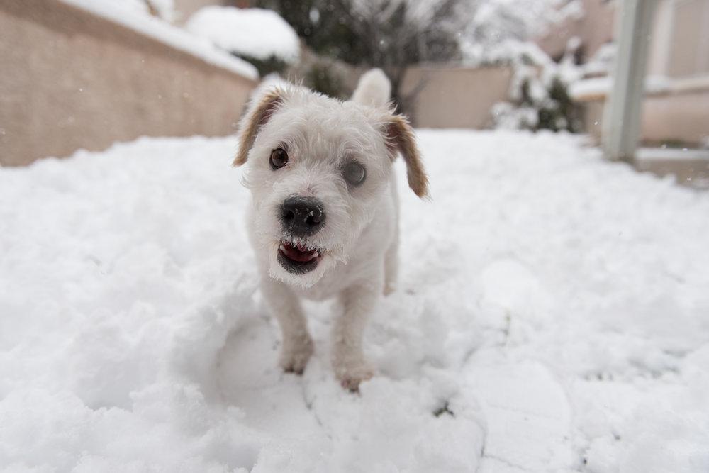 Moxie snow_2_21_19_003.jpg