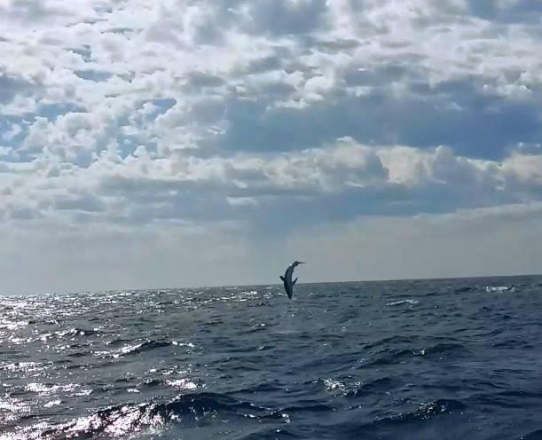 jumping tuna