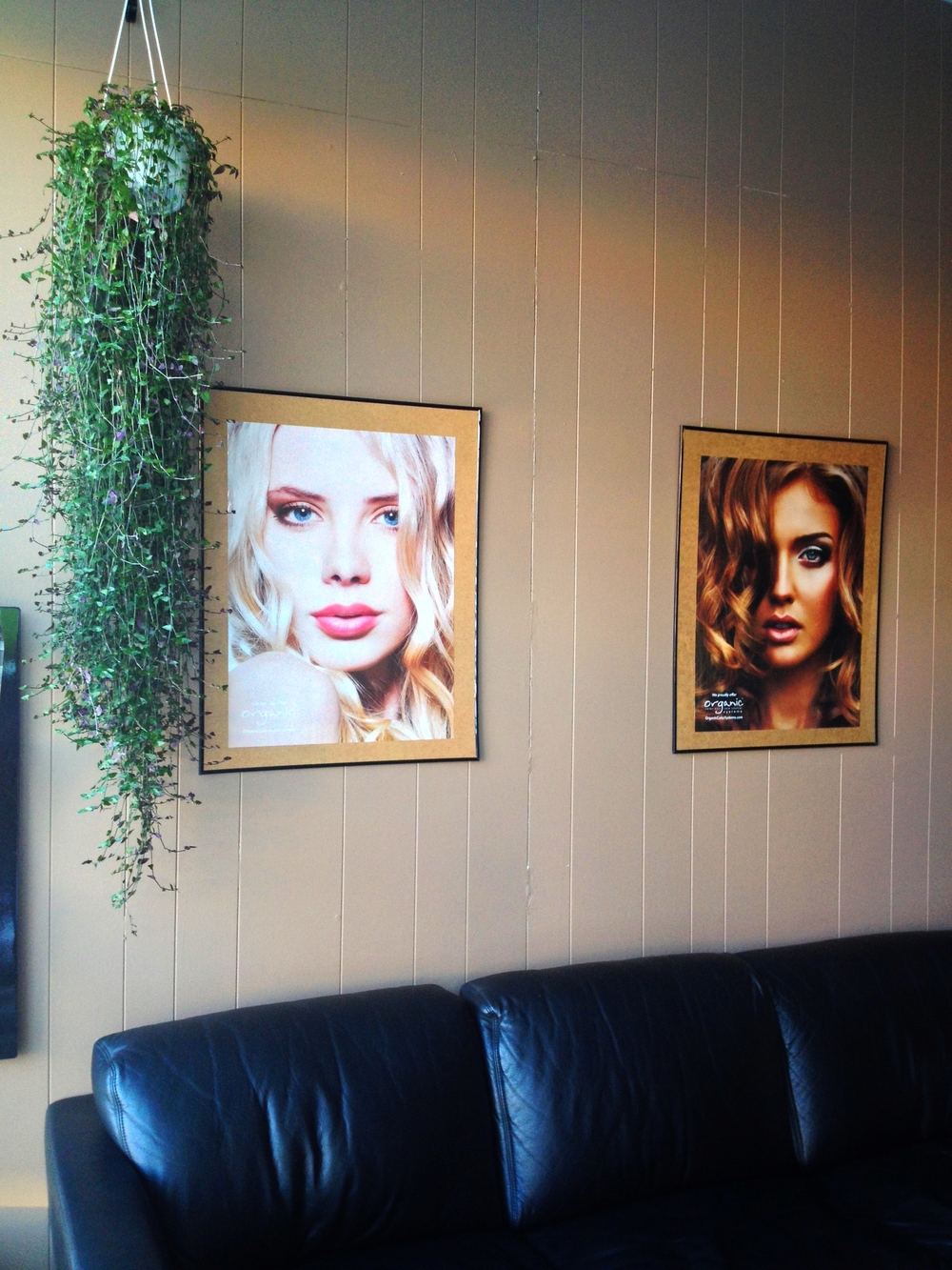 Tahitian Bridal Veil plant & posters in the waiting room