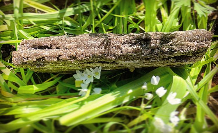 : Petrified Wood :