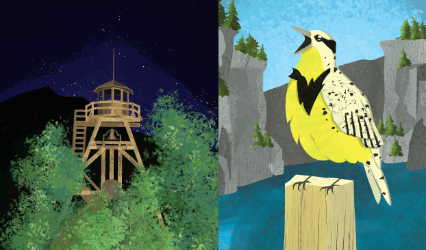 Western Meadowlark and the Guardian of the Gulch, Helena's fire tower.
