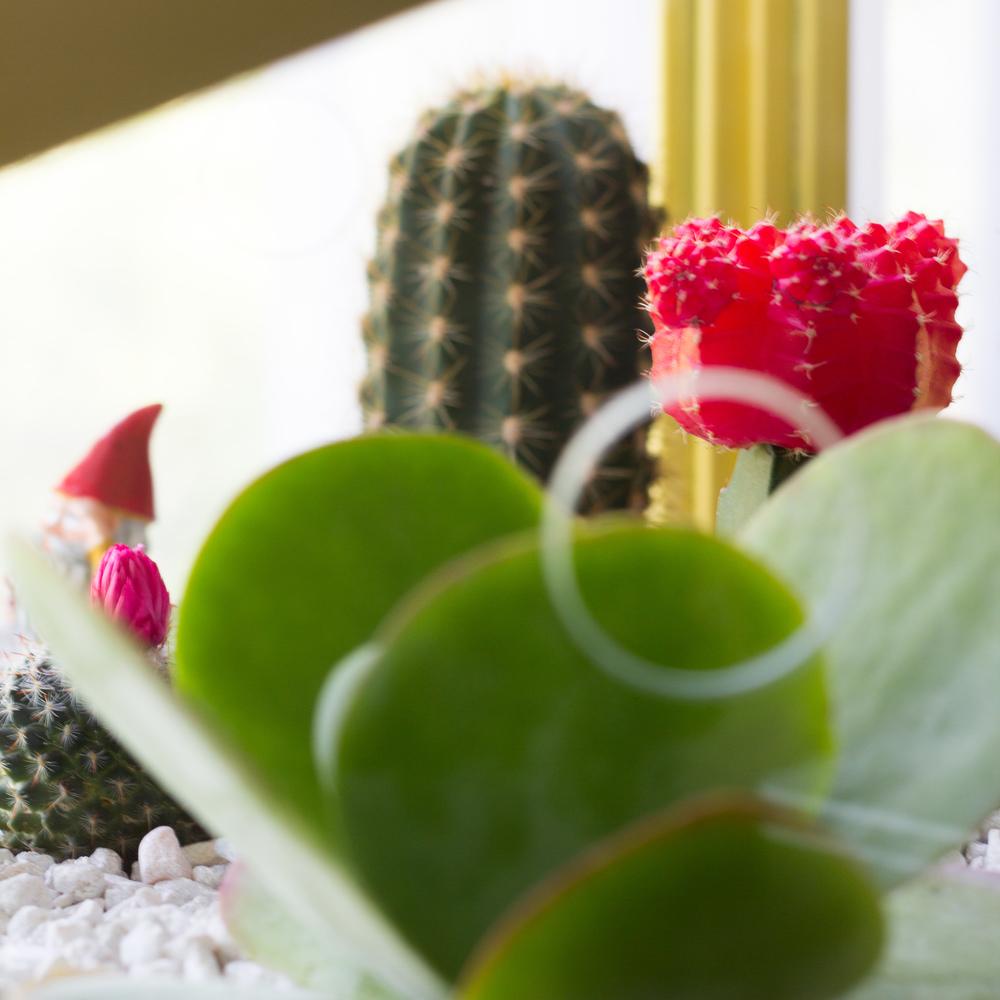 cactus-19.jpg